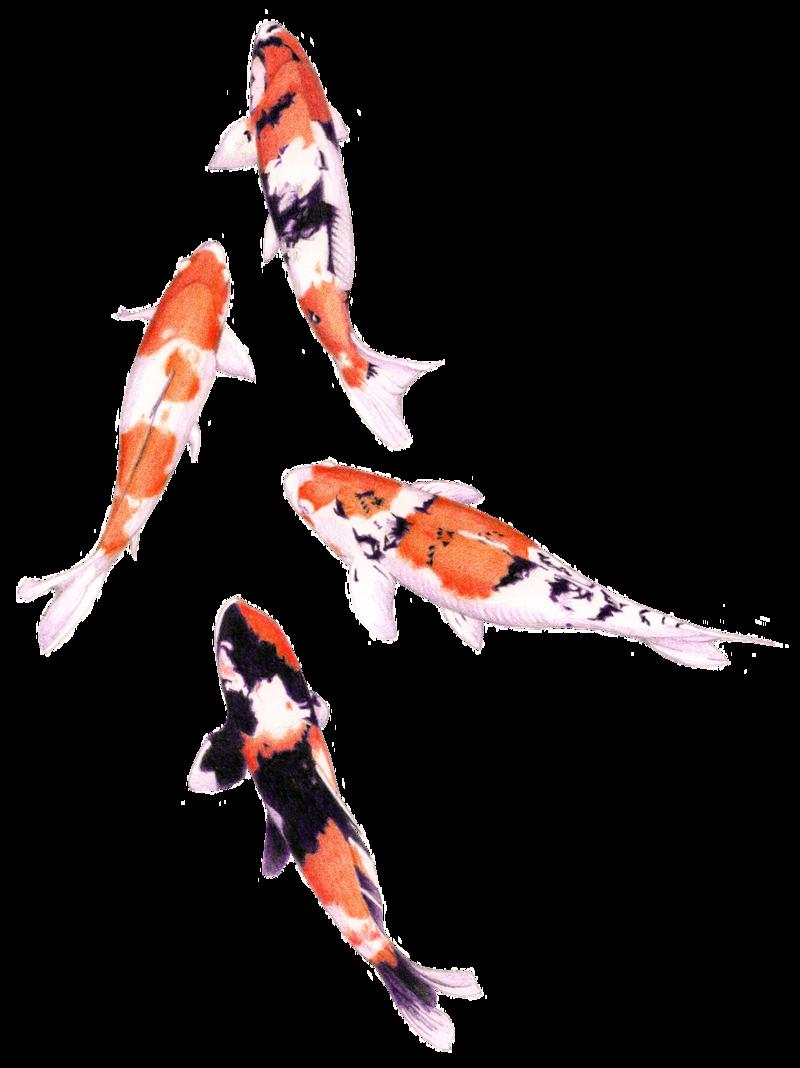 halak-uszikalnak